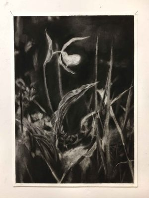 1877…vestige, charcoal on paper, 50 x 70 cm