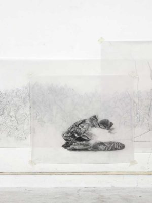 vol, graphite on tracing paper, 180 x 70 cm